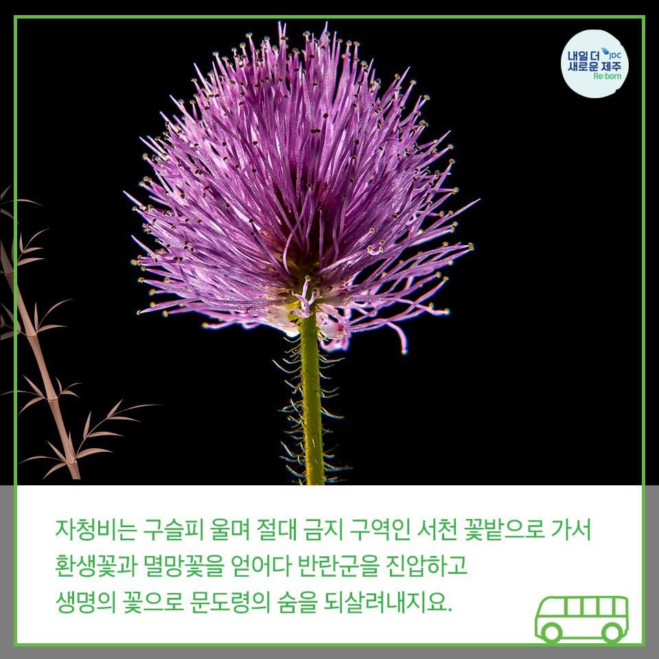 자청비는 구슬피 울며 절대 금지 구역인 서청 꽃밭으로 가서 환생꽃과 멸망꽃을 얻어다 발나군을 진압하고 생명의 꽃으로 문도령의 숨을 되살려내지요.