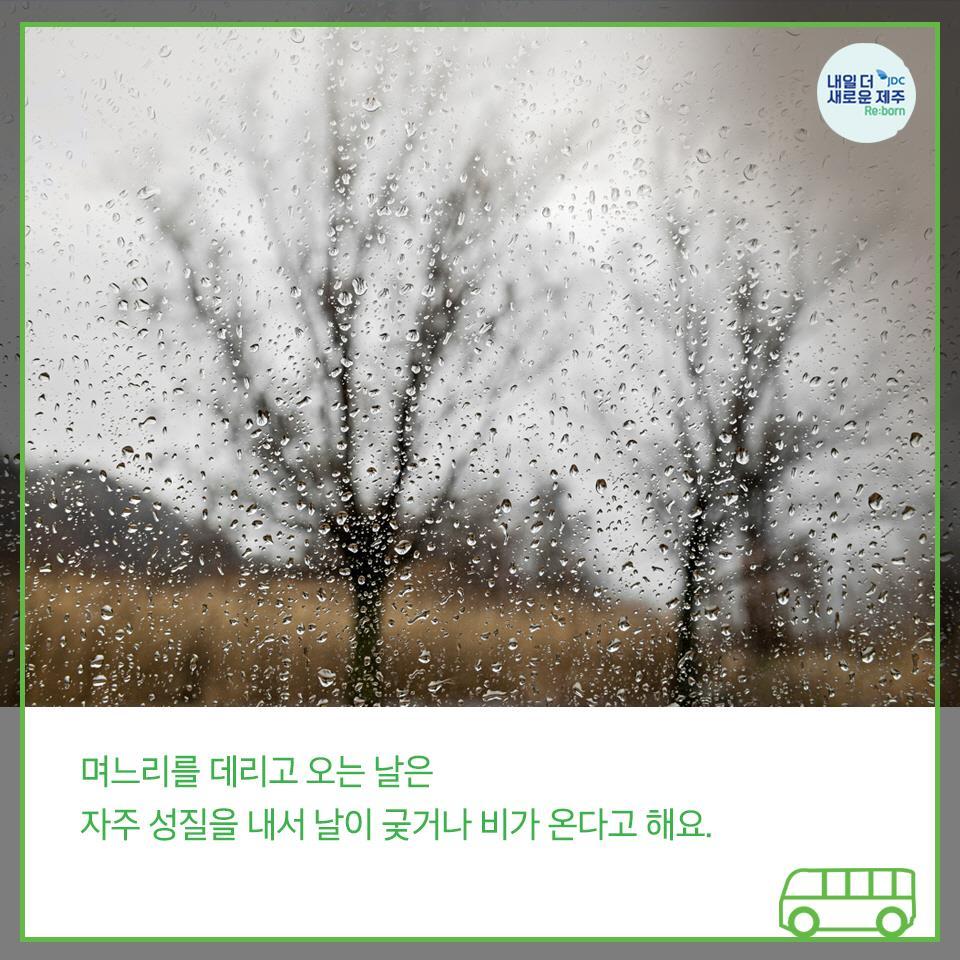 며느리를 데리고 오는 날은 자주 성질을 내서 날이 궃거나 비가 온다고 해요.