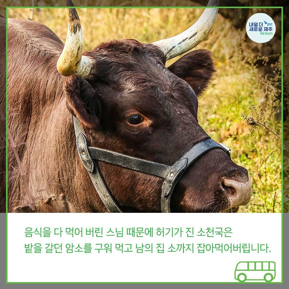 음식을 다 먹어 버린 스님 때문에 허기가 진 소천국은 밭을 갈던 암소를 구워 먹고 남의 집 소까지 잡아먹어버립니다.