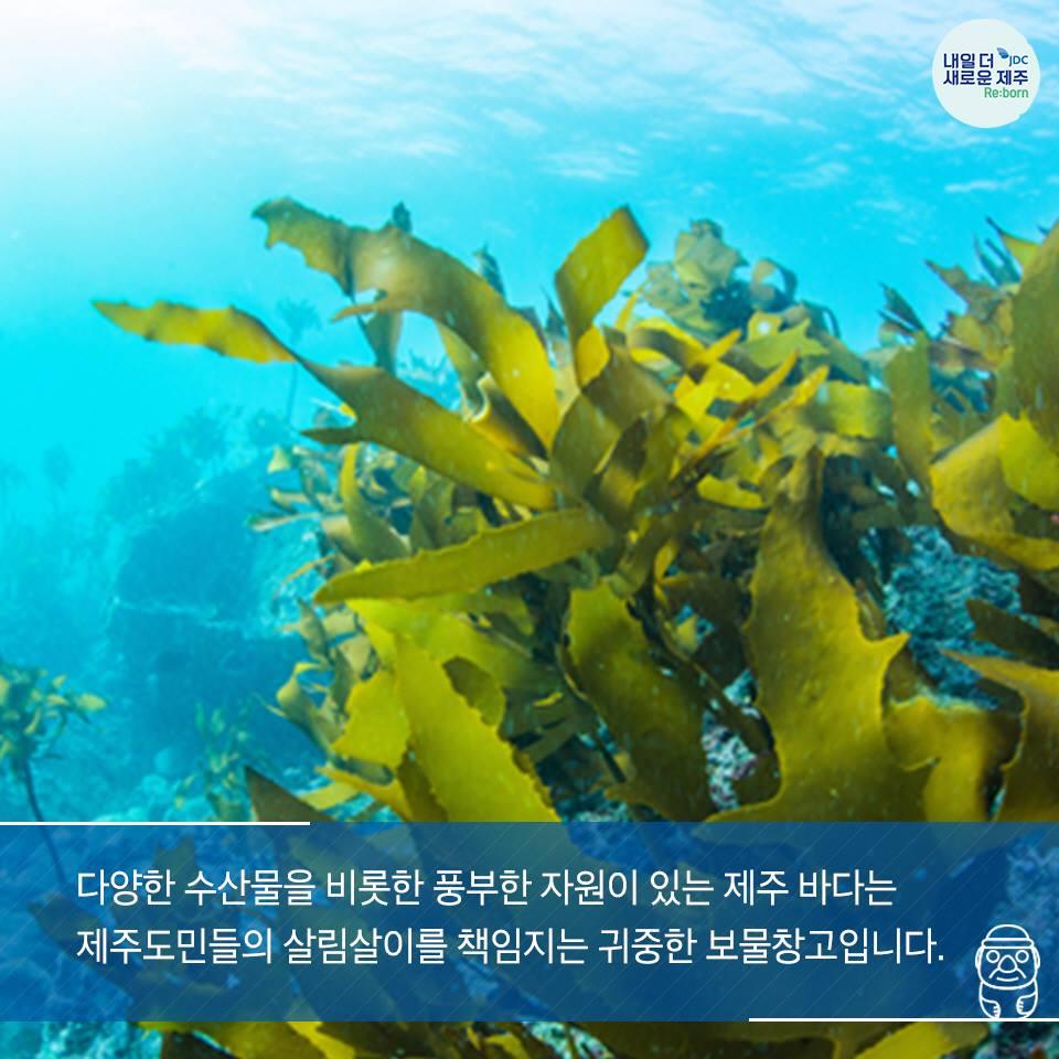 다양한 수산물을 비롯한 풍부한 자우너이 있는 제주 바다는 제주도민들의살림살이를 책임지는 귀중한 보물창고 입니다.