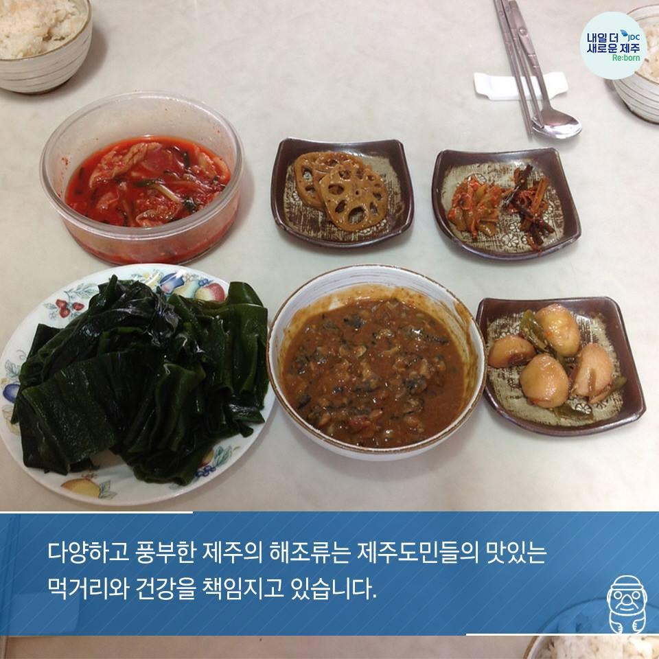 다양하고 풍부한 제주의 해조류는 제주도민들의 맛있는 먹거리와 건강을 책임지고 있습니다.