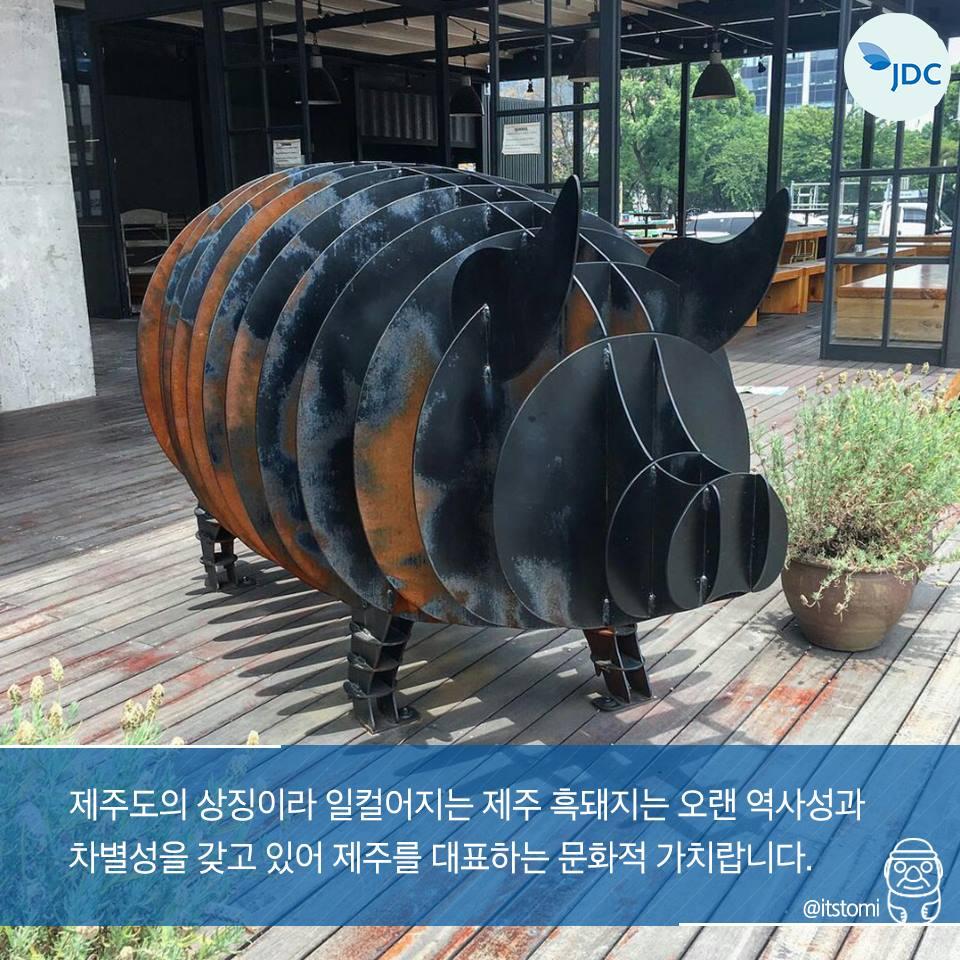 제주도의 상징이라일컬어지는 제주 흑돼지는 오랜 역사성과 차별성을 갖고 있어 제주를 대표하는 문화적 가치랍니다.