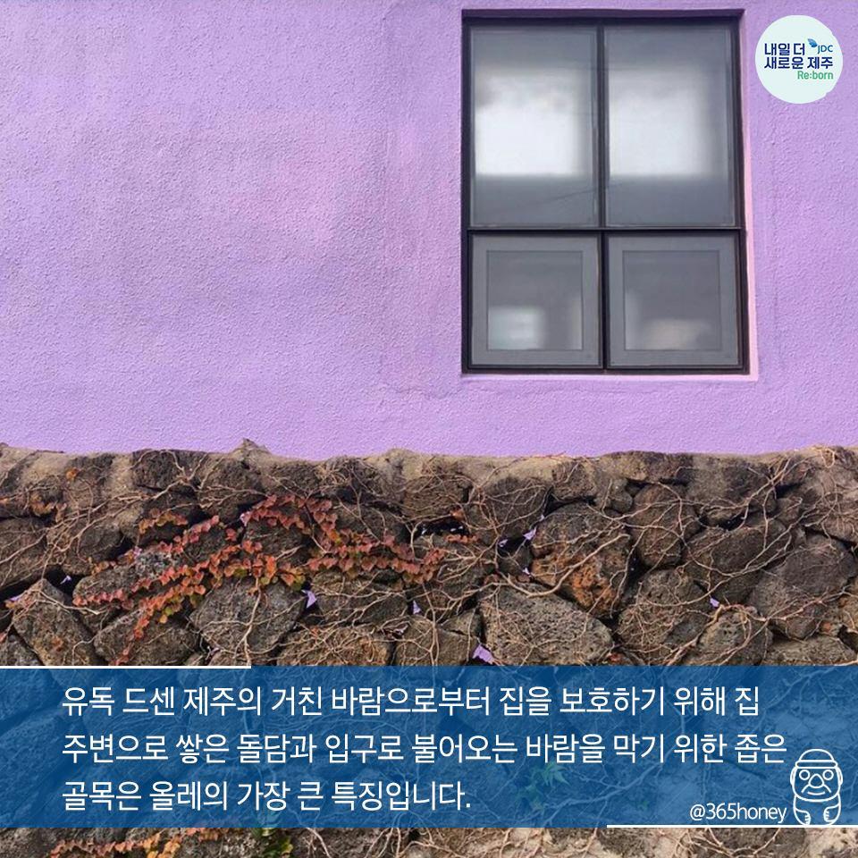 유독 드센 제주의 거친 바람으로부터 집을 보호하기 위해 집 주변으로 쌓은 돌담과 입구로 불어오는 바람을 막기 위한 좁은 골목은 올레의 가장 큰 특징입니다.