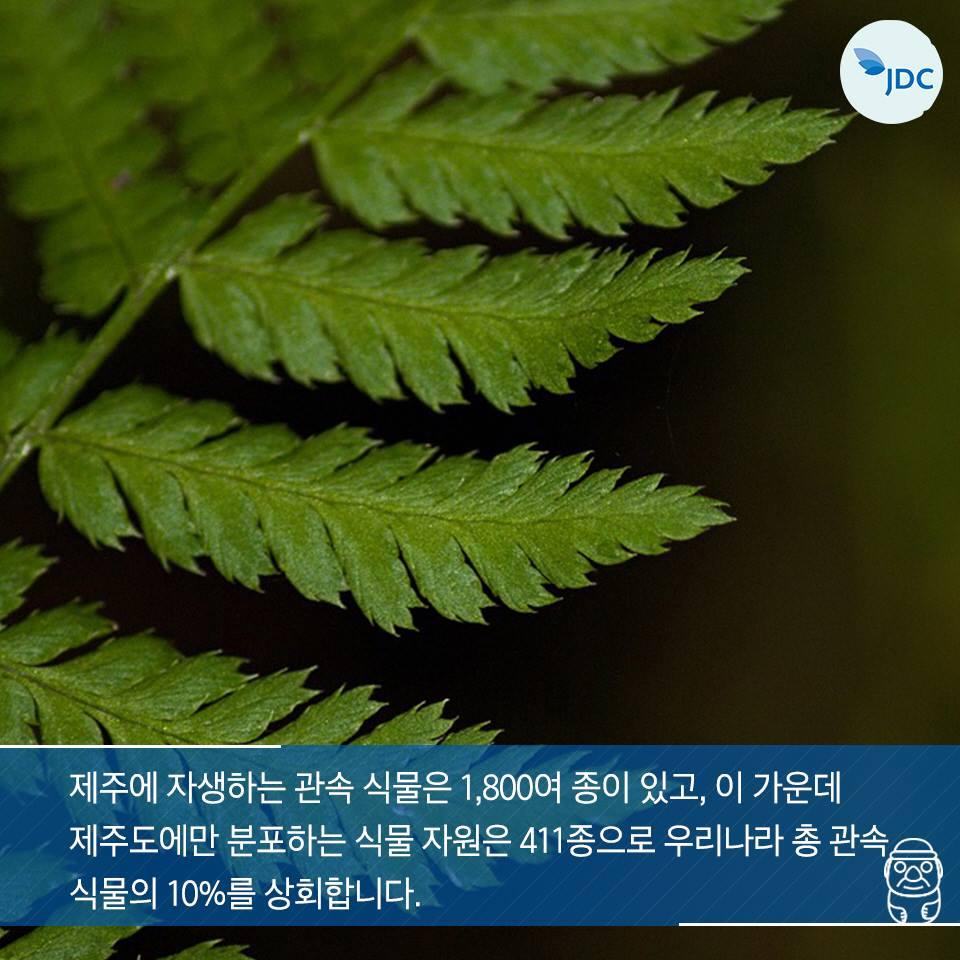 제주에 자생하는 관속 식물은 1,800여 종이 있고, 이 가운데 제주도에만 분포하는 식물 자우너은 411종으로 우리나라 총 관속 식물의 10%를 상회합니다.